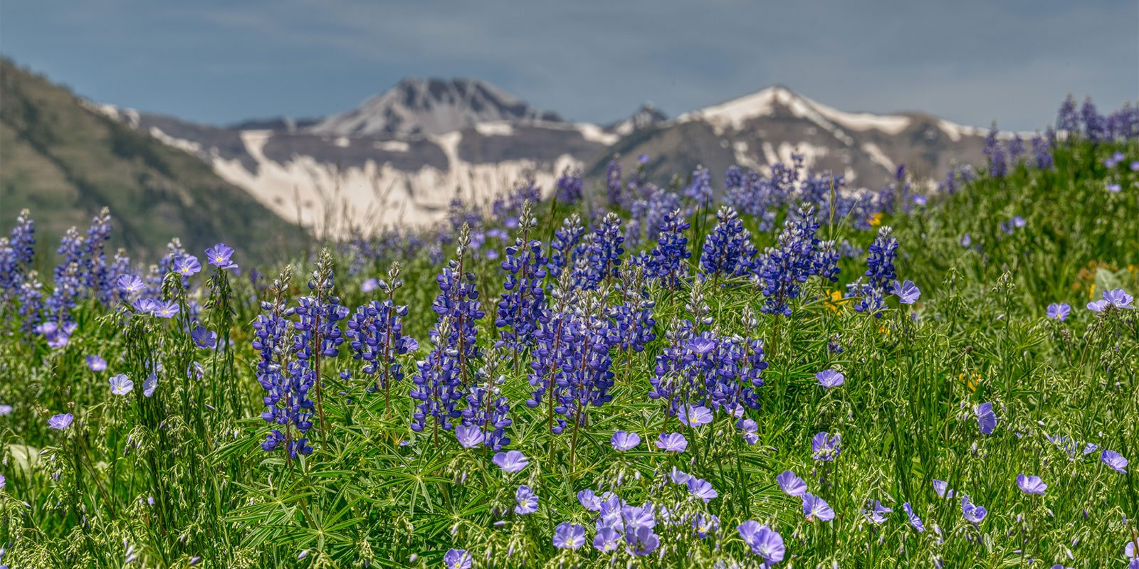 Spring flowers mountains